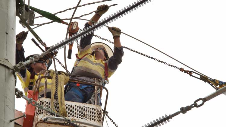 Electricity line maintenance